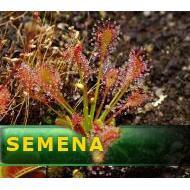 Masožravé rostliny semena