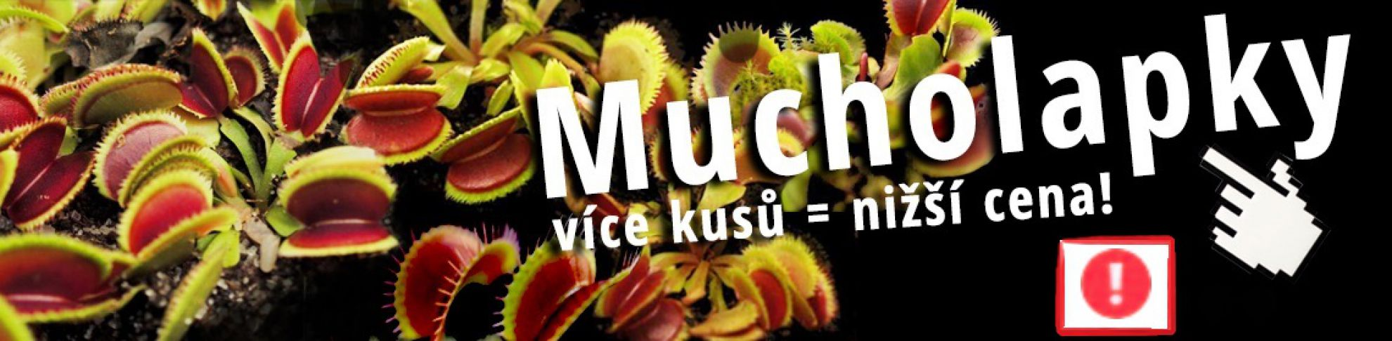 Mucholapky, masožravé rostliny - výhodný nákup